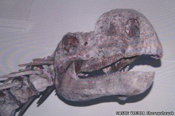 Картинки по запросу Черепа динозавров фото